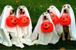 Even dogs don't escape fancy dress at halloween...